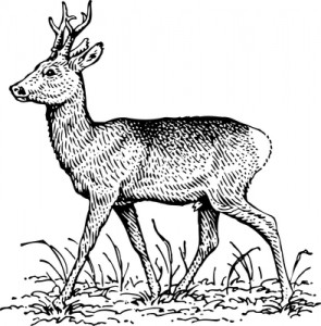 """Are you a """"Musk Deer"""" on Innovation?"""